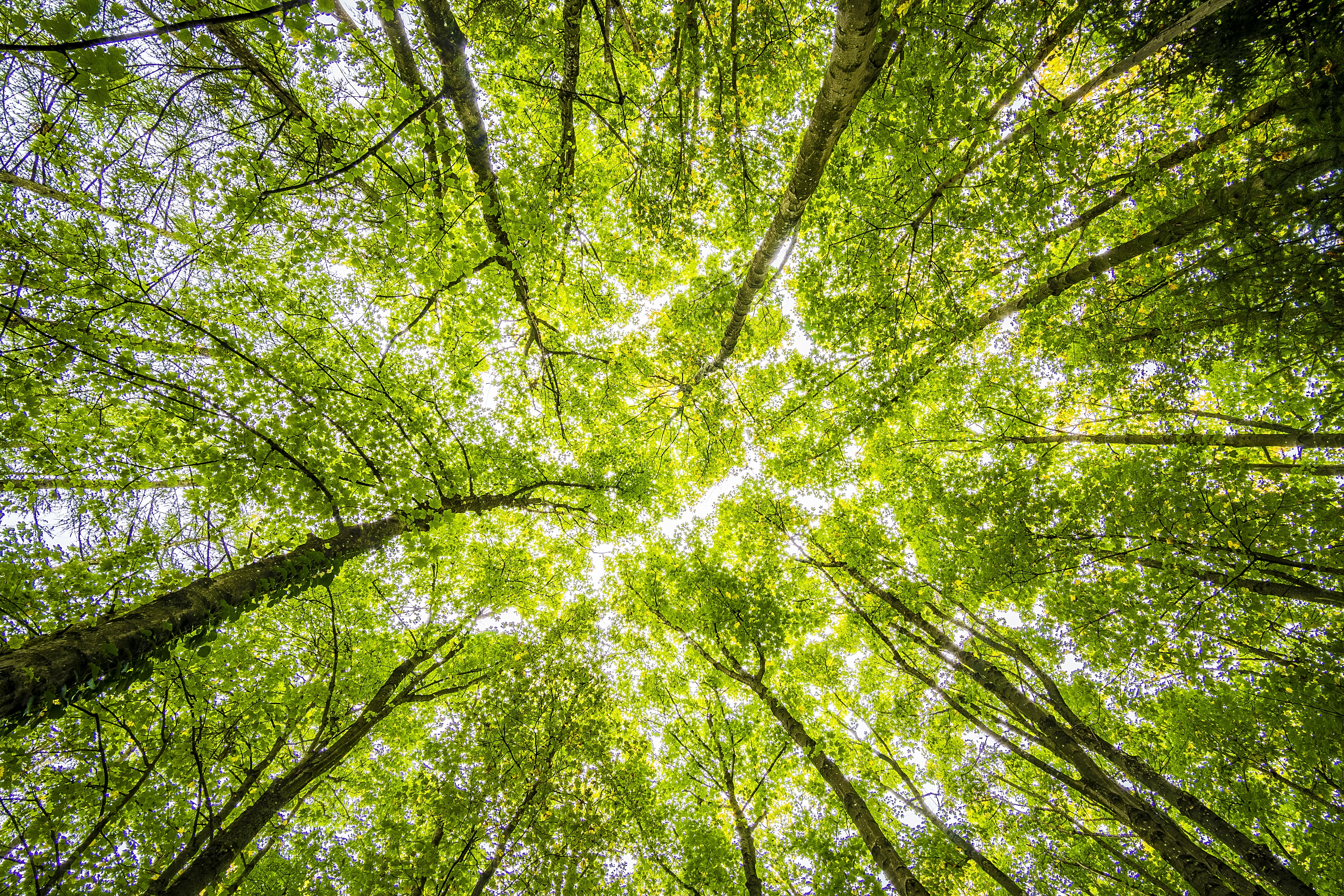 Making it Green: Beyond Material Production