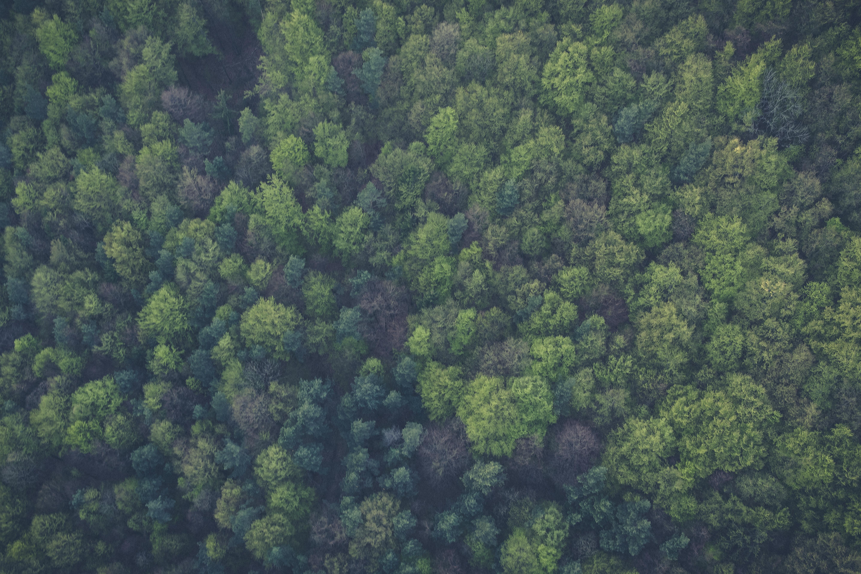 Making it Green: The Creativity vs. The Destruction Paradox